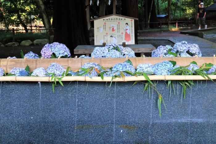 大宮 氷川神社 「茅の輪くぐり」_d0150720_15585041.jpg