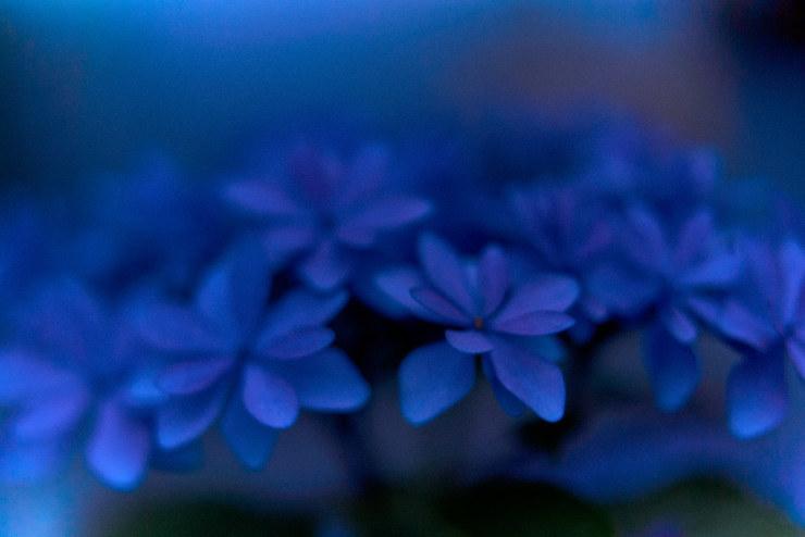 flowers(3cut)_e0342136_22112303.jpg