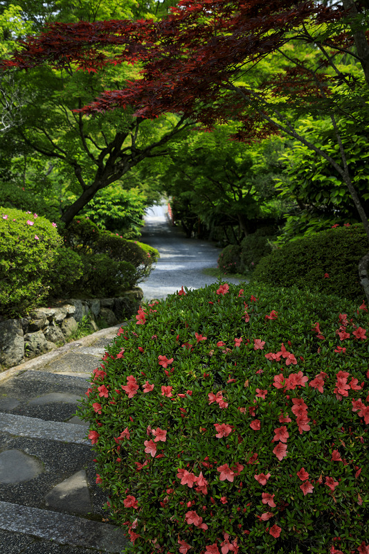 サツキ咲く正法寺(西山)_f0155048_23505776.jpg