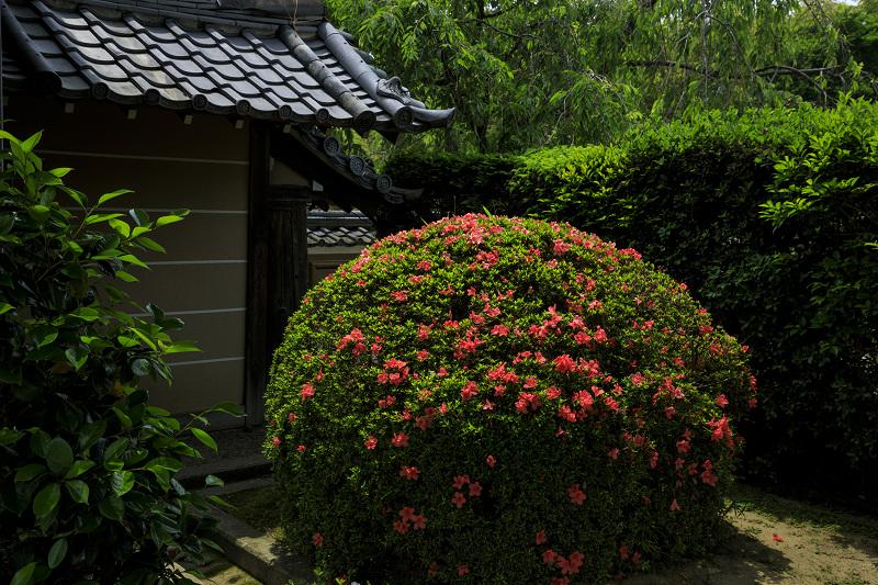 サツキ咲く正法寺(西山)_f0155048_23515076.jpg