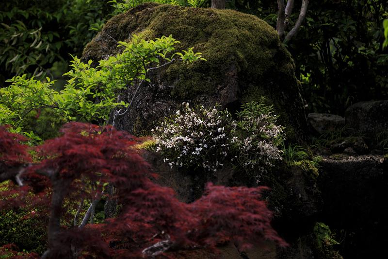 サツキ咲く正法寺(西山)_f0155048_23531599.jpg