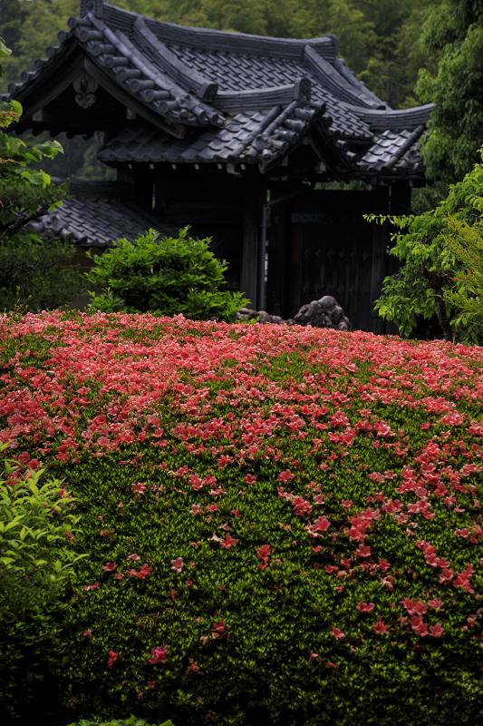 サツキ咲く正法寺(西山)_f0155048_23551526.jpg