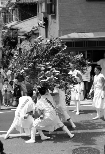 秋谷神明社御祭禮−1_f0156448_01091424.jpg