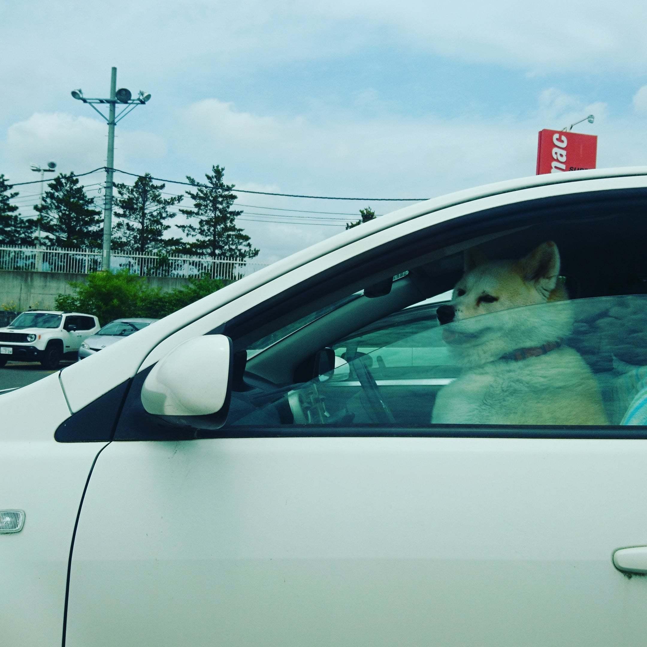 ワンちゃんドライバー。安全運転だワン!_b0106766_14345067.jpg
