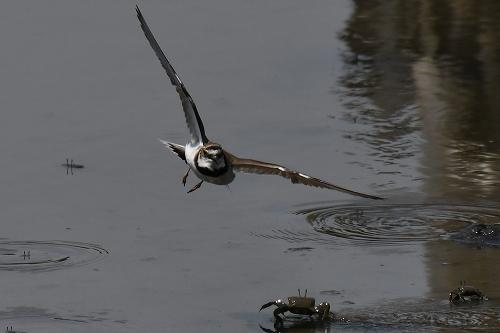★幼鳥が多く観察されています・・・先週末の鳥類園(2020.6.20~21)_e0046474_23361250.jpg