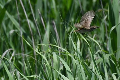 ★幼鳥が多く観察されています・・・先週末の鳥類園(2020.6.20~21)_e0046474_23362387.jpg