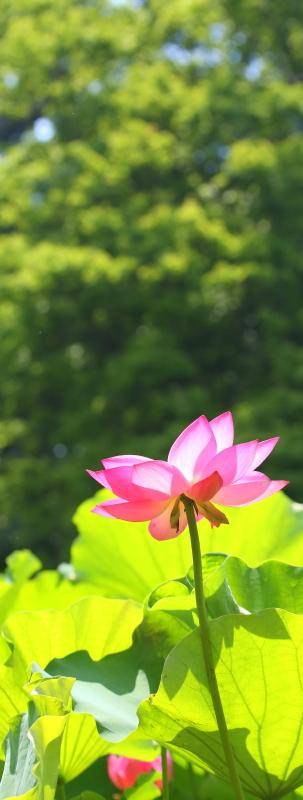 鶴舞公園_f0367980_20230290.jpg