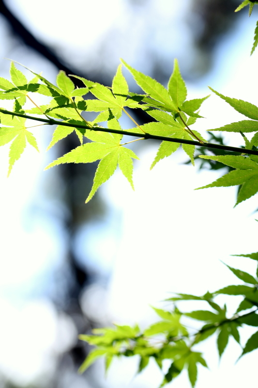 鶴舞公園_f0367980_20324938.jpg