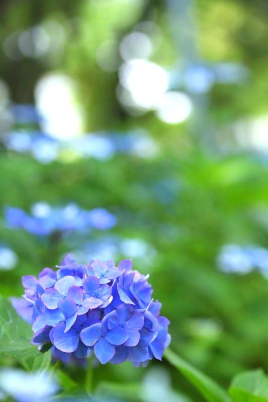 鶴舞公園_f0367980_20352018.jpg