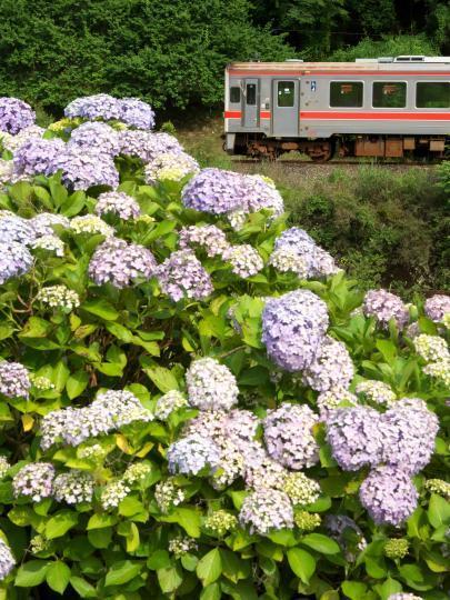 JR名松線とあじさい_f0266284_14120405.jpg