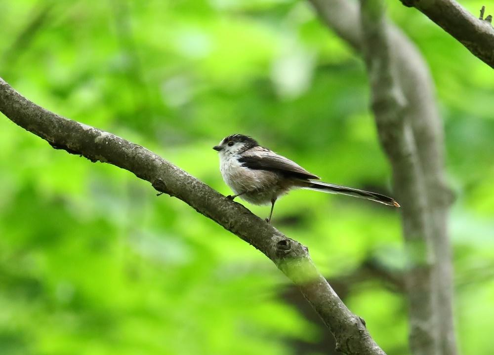 近隣探鳥。2._f0305401_19115672.jpg