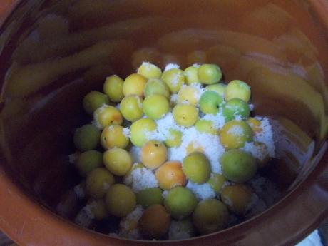 梅を漬ける_a0203003_18022284.jpg