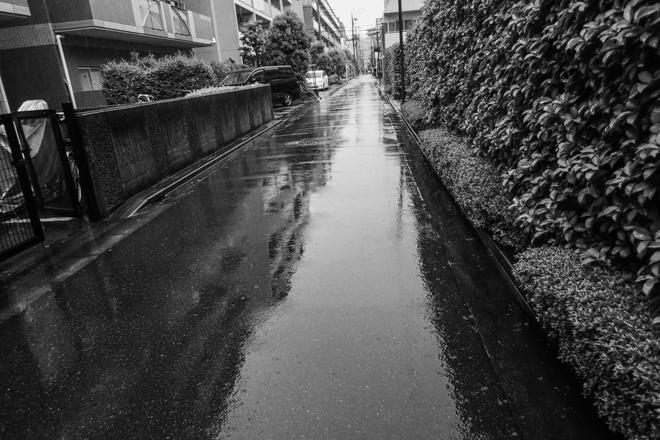 2020.06.22 朝から雨_a0390712_11263973.jpg