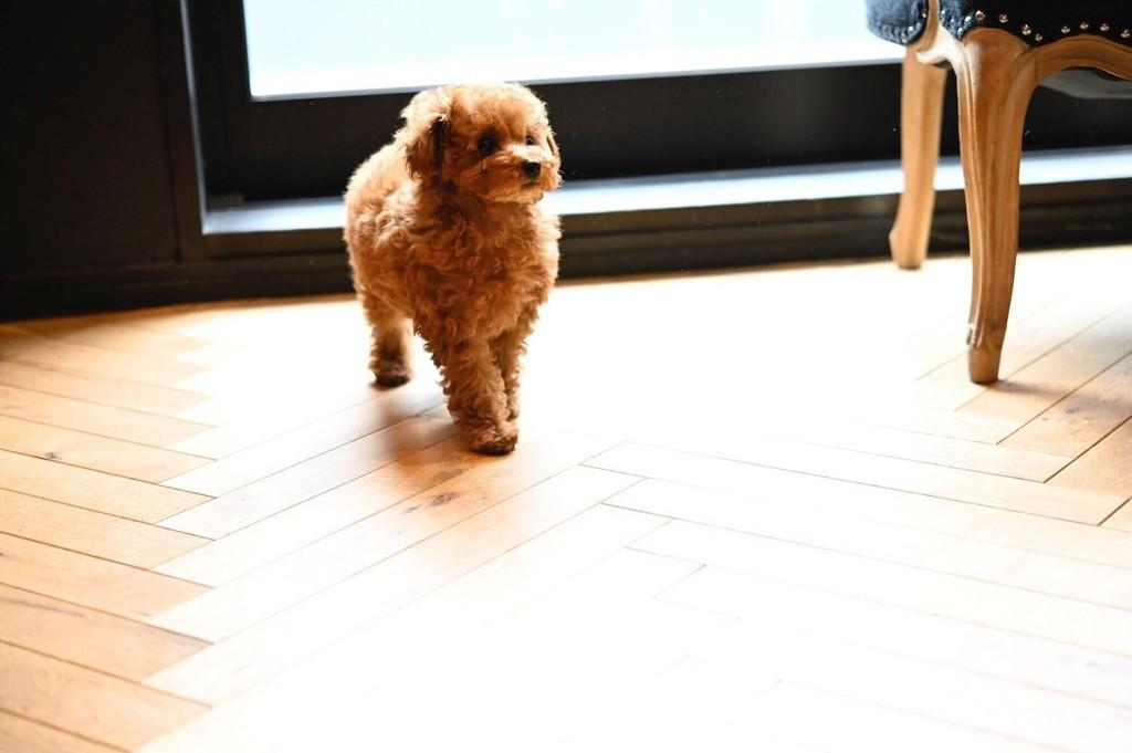 ☆ dogshopMILIEU ☆_d0060413_15395720.jpg