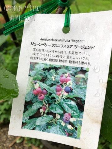 Berry Berry_e0365614_23221520.jpg