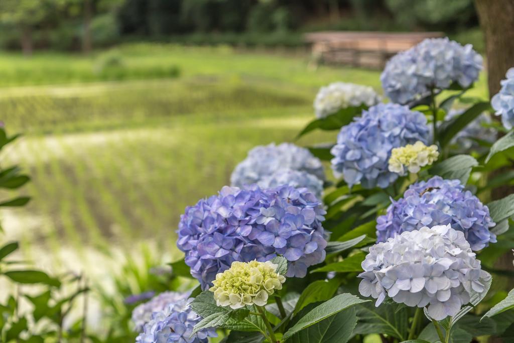 紫陽花と睡蓮_b0010915_21081210.jpg
