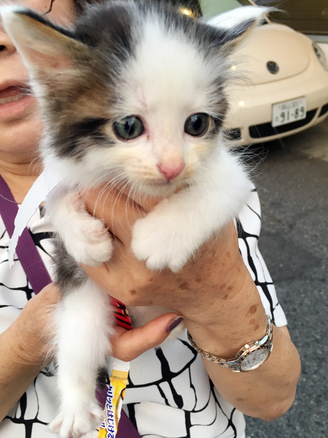 野良猫/保護/岡山_c0225122_05375595.jpg