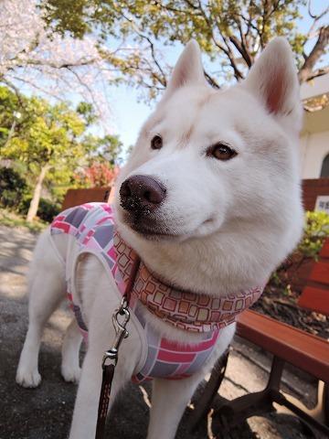 散歩屋日誌【44】_c0062832_17252039.jpg