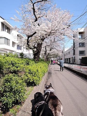 散歩屋日誌【44】_c0062832_17252047.jpg