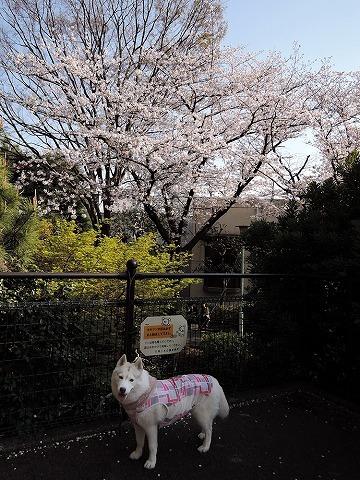散歩屋日誌【44】_c0062832_17252079.jpg