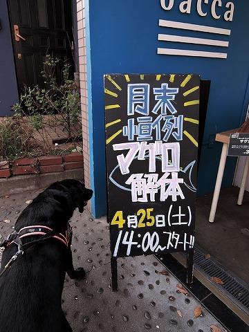 散歩屋日誌【44】_c0062832_17252103.jpg