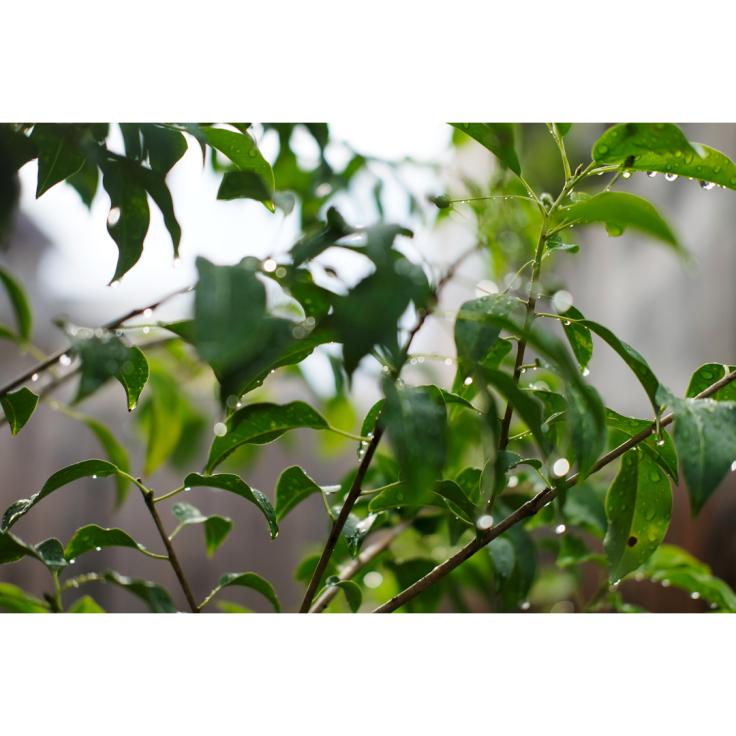 わが家の庭づくり。1日目2日目のようす。_d0227246_11174665.jpg