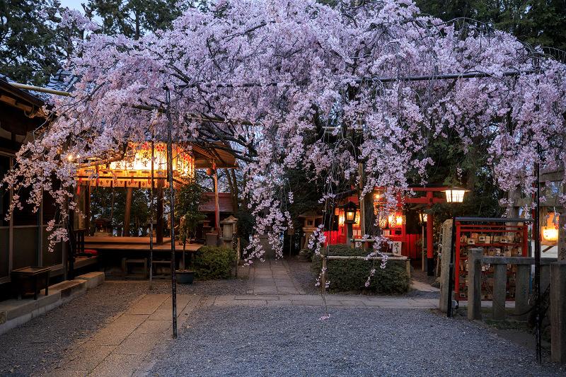 2020桜咲く京都 水火天満宮の夕暮れ_f0155048_0103320.jpg