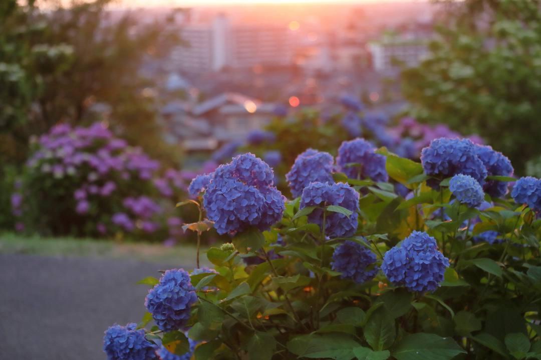 夏至の夕陽_e0403850_10245111.jpg