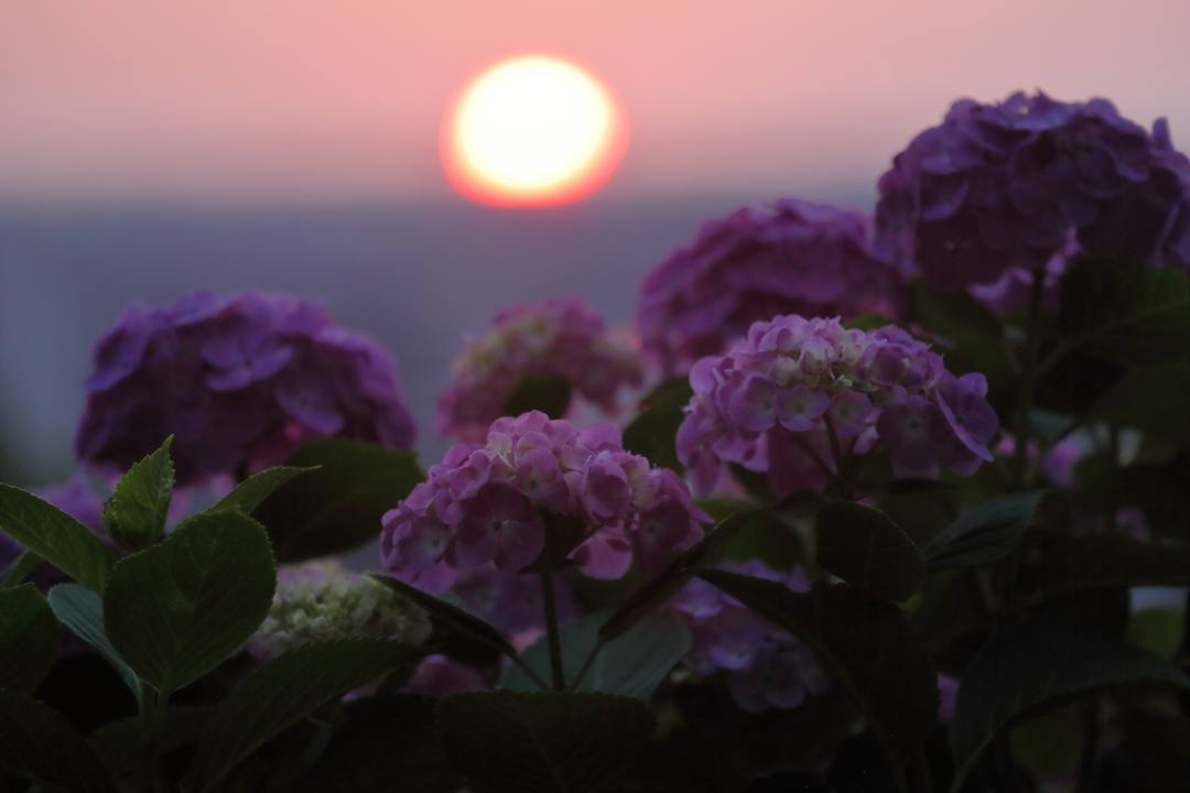 夏至の夕陽_e0403850_10253796.jpg