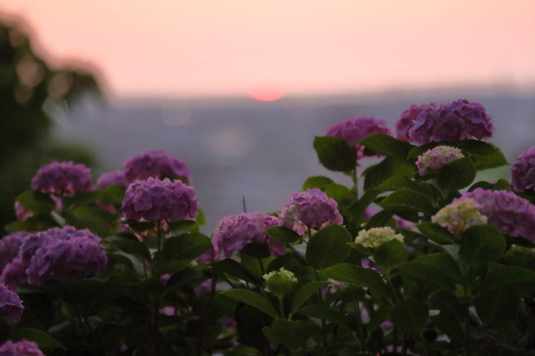 夏至の夕陽_e0403850_11070843.jpg