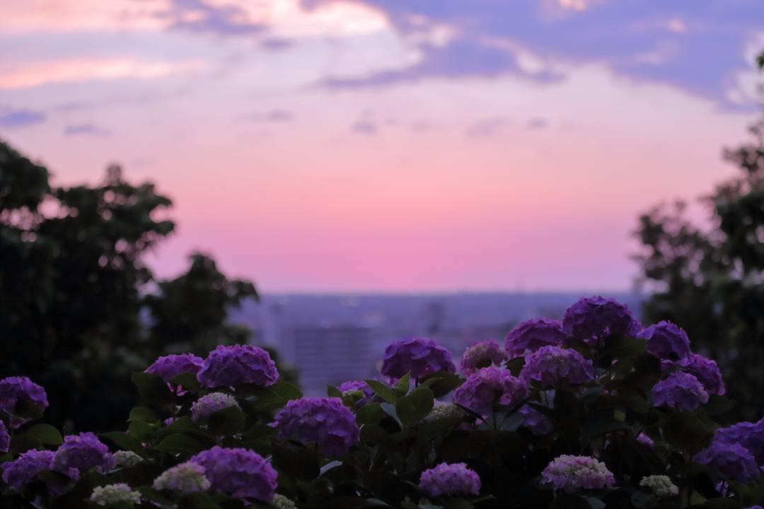 夏至の夕陽_e0403850_11070862.jpg