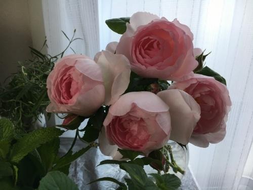 バラ、ばら、薔薇の季節ですよ~ん♪_e0326953_13284618.jpg