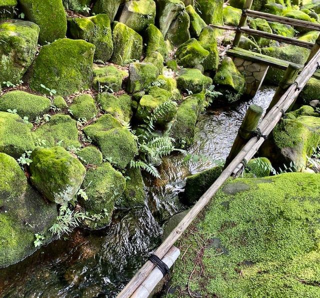cycling   苔の緑の美しさに感動~!_a0165160_11304610.jpg
