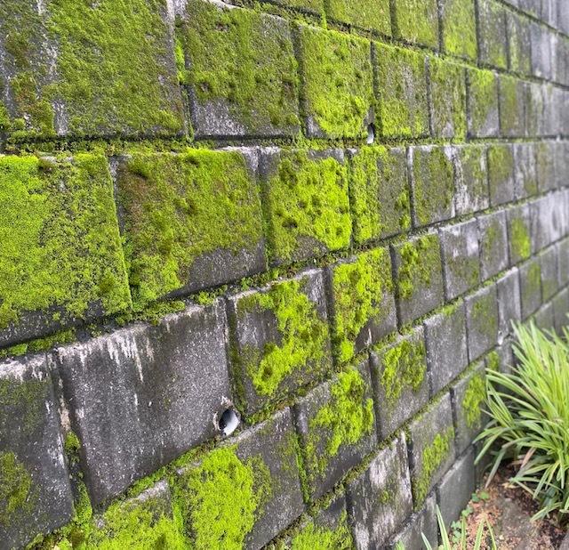 cycling   苔の緑の美しさに感動~!_a0165160_11334706.jpg