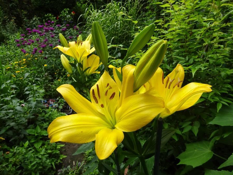 庭の花 夏その3_f0059673_23481132.jpg