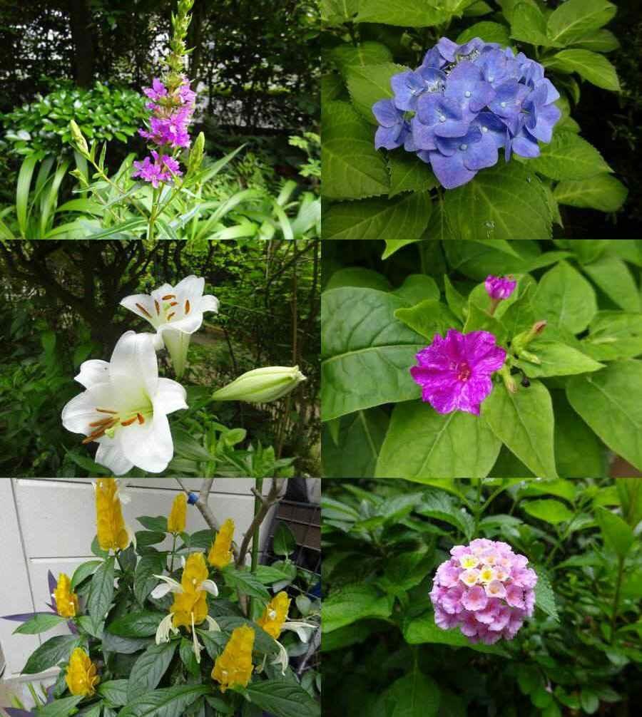 庭の花 夏その3_f0059673_23533087.jpg