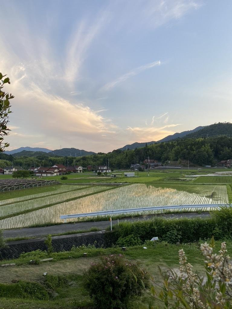 梅雨の中休み 〜紫陽花とともに〜_c0334574_19484979.jpeg
