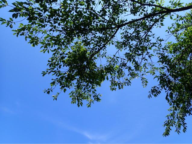 【読書日記】ハワイごよみ365日~季節ごとに楽しむ、島々の素顔~_e0397681_08272149.jpg