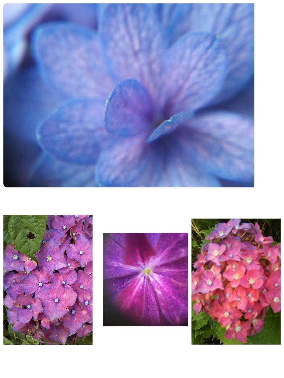 卵焼きと紫陽花と_e0281793_16163353.jpeg
