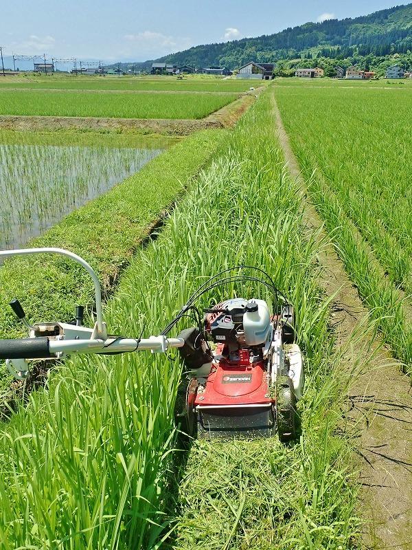 兼業農家は2回目の草刈り作業を行いました_c0336902_20041550.jpg