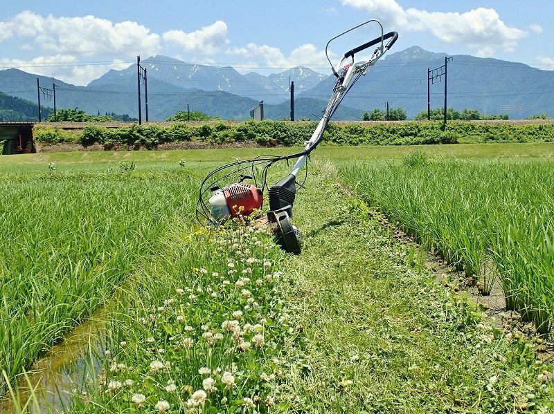 兼業農家は2回目の草刈り作業を行いました_c0336902_20041910.jpg