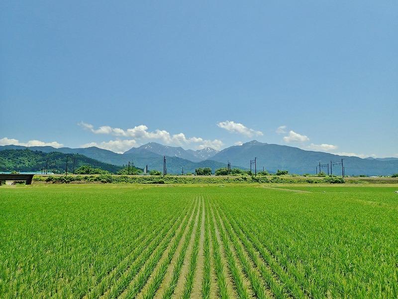 兼業農家は2回目の草刈り作業を行いました_c0336902_20043183.jpg