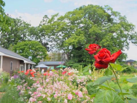 オープンガーデン大澤邸(平川市)*2020.06.18_b0147224_823623.jpg