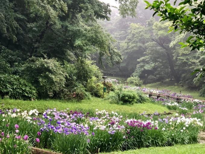 6月26日  「菖蒲花咲く」の日_b0255824_21380932.jpg