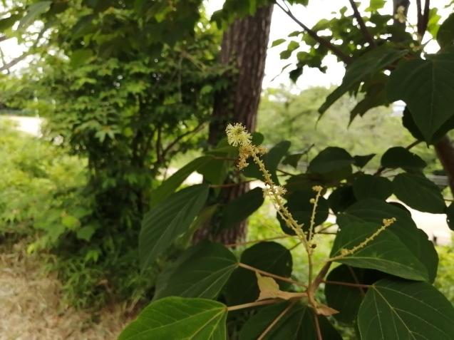 6月の篠原園地の植物🌸_e0412531_16111013.jpg