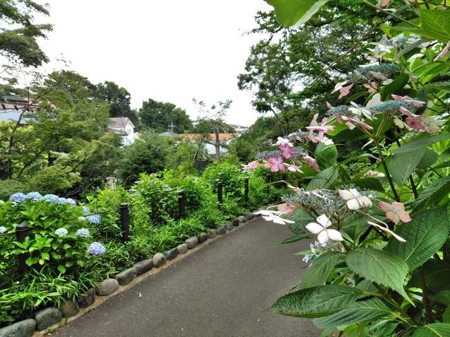 6月の篠原園地の植物🌸_e0412531_16113678.jpg
