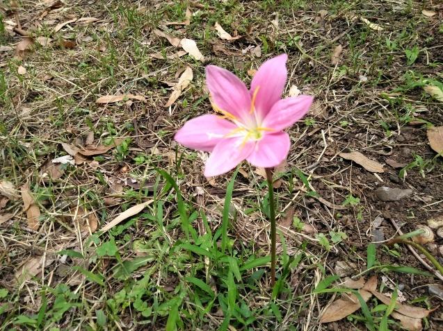 6月の篠原園地の植物🌸_e0412531_16114999.jpg