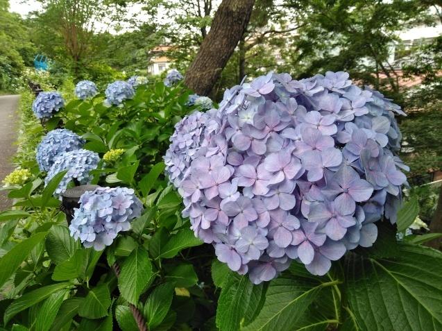 6月の篠原園地の植物🌸_e0412531_16120038.jpg
