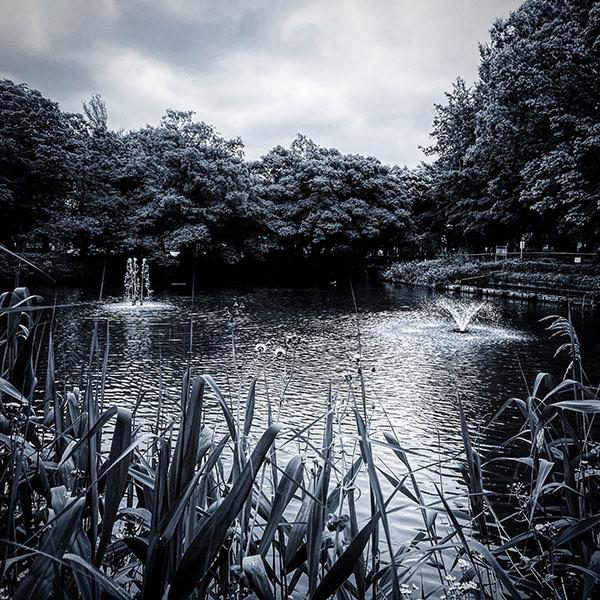 妙正寺公園 / iPhone 11_c0334533_15155906.jpg