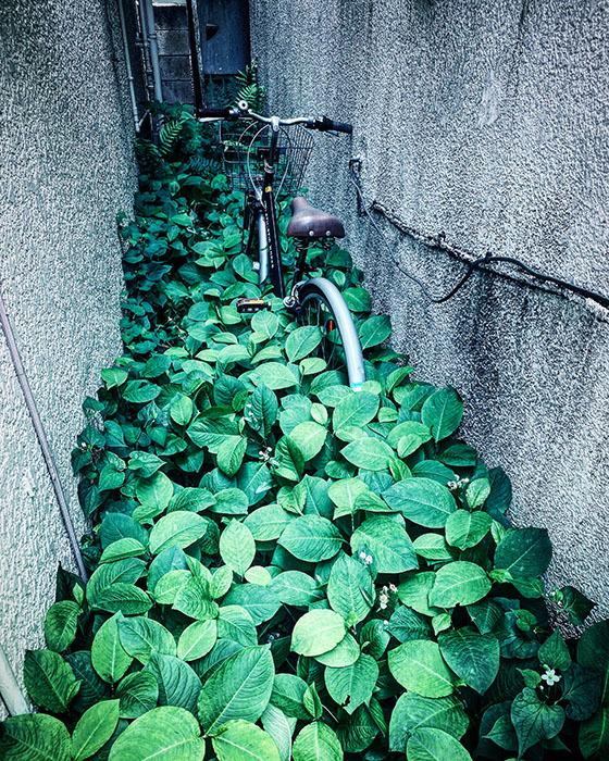 杉並区下井草 / iPhone 11_c0334533_16520897.jpg